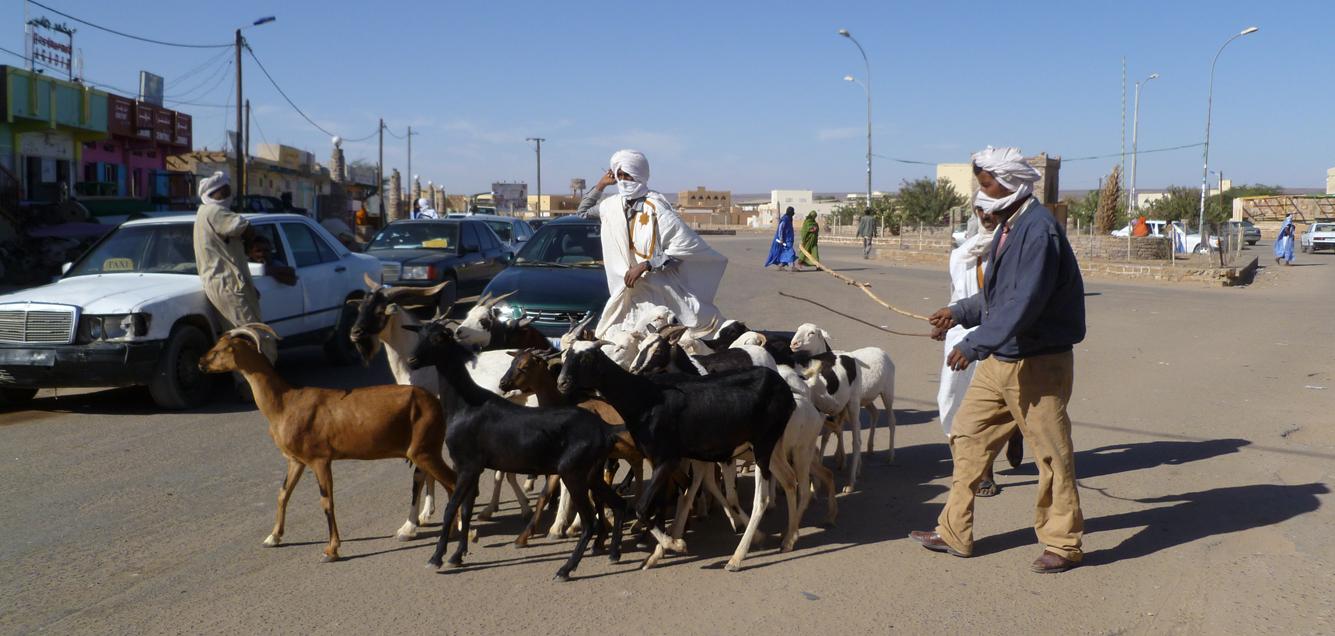 Marchand de chèvres à Atar